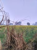 Close To Nature. Fields give u pleasure sometimes Stock Photography