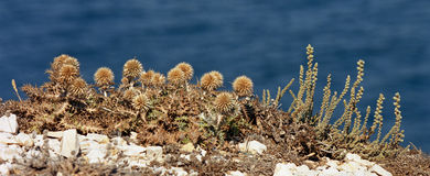 Close to some thistles in South France Stock Photo