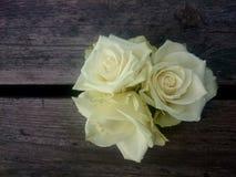Close together. Close to a flower Stock Photos
