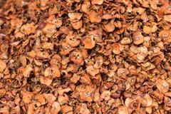 close 3 torkade upp - frukttyper Royaltyfri Fotografi