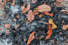 Close up à pilha das folhas Ash Background foto de stock royalty free