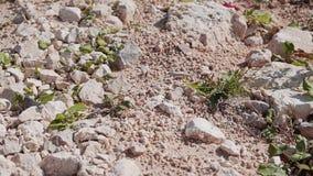 Close-up à terra rochoso A câmera está no movimento Rupturas da grama através das pedras vídeos de arquivo