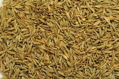 Close up às sementes do cominhos fotografia de stock