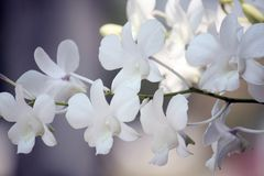 Close-up белых орхидей на светлой предпосылке Стоковая Фотография