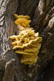 Close-up грибка вала Стоковые Изображения RF