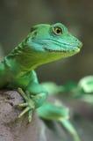 Close-up зеленой ящерицы Стоковые Изображения