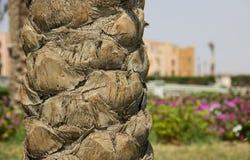 Close-up пальмы Стоковое Фото