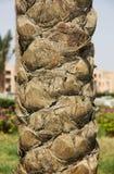 Close-up пальмы Стоковое фото RF