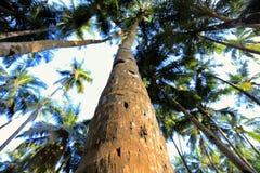 Close-up пальмы Стоковое Изображение RF