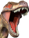 Close-up 2 do Tyrannosaurus Fotografia de Stock