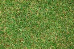 Grass lawn abstract background Stock Images