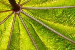 Close-up abstract leave structure. Close-up abstract green and yellow leave structure stock photography
