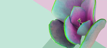Close-up abstrato da flor nas cores pastel Imagens de Stock