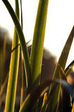 Close up abstrato da planta Foto de Stock