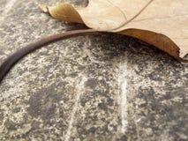 Close-up abstrato de uma folha da árvore plana do outono em uma superfície de pedra fotos de stock royalty free