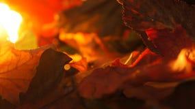 Close up abstrato de vário Autumn Fall Leaves no fundo da luz da noite imagem de stock