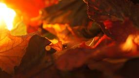Close up abstrato de vário Autumn Fall Leaves no fundo da luz da noite fotos de stock royalty free