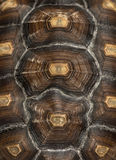 Close-up of an African Spurred Tortoise's carapace Royalty Free Stock Photography