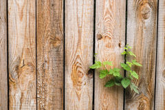 Close up of aged brown wooden wall. New life concept. Royalty Free Stock Images