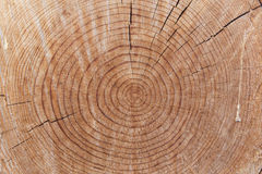 Close-up of aged cut wood trunk Royalty Free Stock Image
