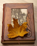 Close up of an album and Autumn leaves. Stock Photo