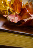 Close up of an album and Autumn leaves. Royalty Free Stock Photography
