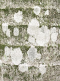 Close-up of algae, moss and lichen growing on tree trunk Royalty Free Stock Photos