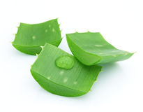 Close-up of aloe vera Royalty Free Stock Photography