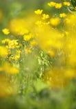 Close up amarelo da flor fotos de stock