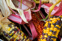 Close up of American Indian corn in a basket Royalty Free Stock Photo