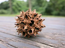 Close up of American sweetgum fruit on a picnic table Royalty Free Stock Photos