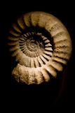 Ammonite Fossil Stock Photo