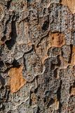 Ancient Tree Texture. Close up an ancient tree in Japan revealing its textures Stock Photos