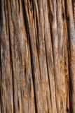 Ancient Tree Texture. Close up an ancient tree in Japan revealing its textures Royalty Free Stock Photography