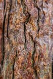 Ancient Tree Texture. Close up an ancient tree in Japan revealing its textures royalty free stock photo