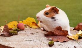 Close-up of Animal Eating Wood Royalty Free Stock Photos