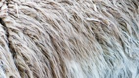 Close-up of animal fur, nature pattern, background Stock Photo
