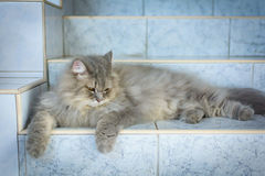 Close up animal Persian cat sleeping in bed and light blur backg. Round. selective focus Stock Image