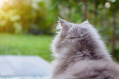 Close up animal Persian cat sleeping in bed. Selective focus Stock Photo