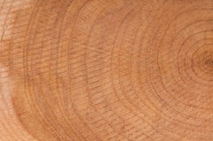 Annual rings. Close up of annual rings on a tree trunk saw cut Royalty Free Stock Images
