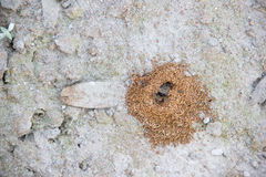 Close up of ants nest Stock Photos