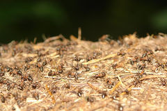 Close up of ants nest Stock Image