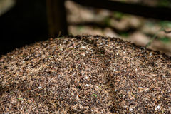 Close-up of ants nest. Large ant hill in summer forest. Royalty Free Stock Photos
