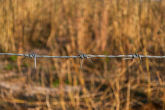 Close up ao arame farpado no fundo do prado do borrão Imagem de Stock
