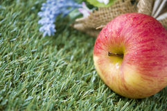 Close up apple on grass Stock Photography