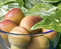 Close up of apricots Stock Photography
