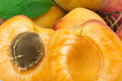 Close up apricots. Royalty Free Stock Photo