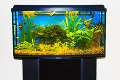 Close up of aquarium tank full of fish Royalty Free Stock Photography