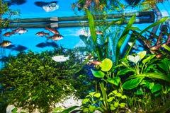 Close up of aquarium tank full of fish. The close up of aquarium tank full of fish Stock Photography