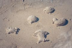 Close up aquatic animals that made from sand with beach toys. royalty free stock photography